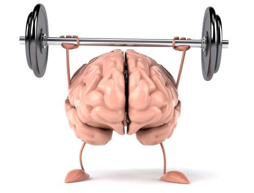 brain build 1