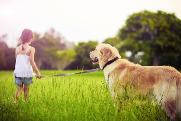 sprehod pes